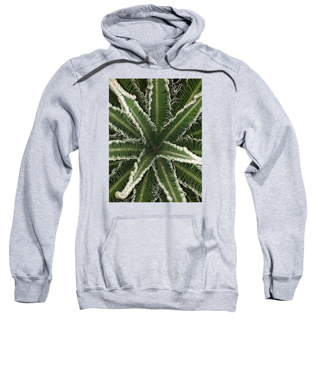 Palm Sweatshirt featuring the photograph Emerging Palm by Brad Mullins