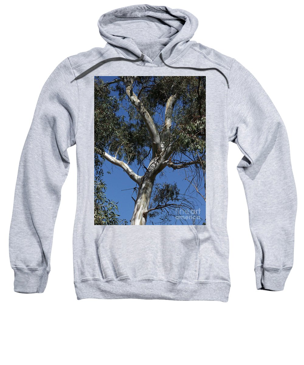 Trees Sweatshirt featuring the photograph Eucalyptus by Kathy McClure