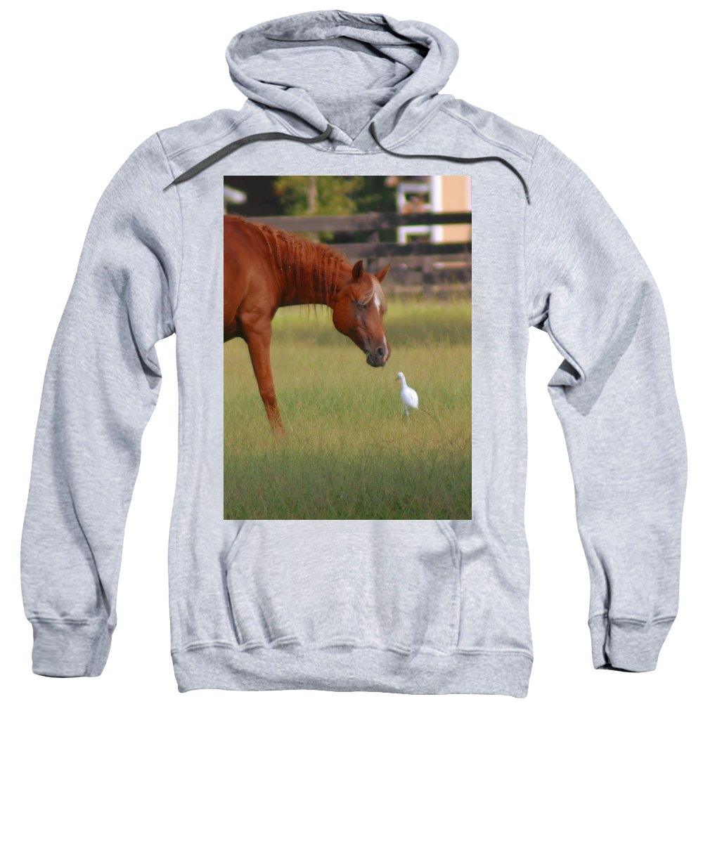 Horse Sweatshirt featuring the photograph Excuse Me by Donna Bentley