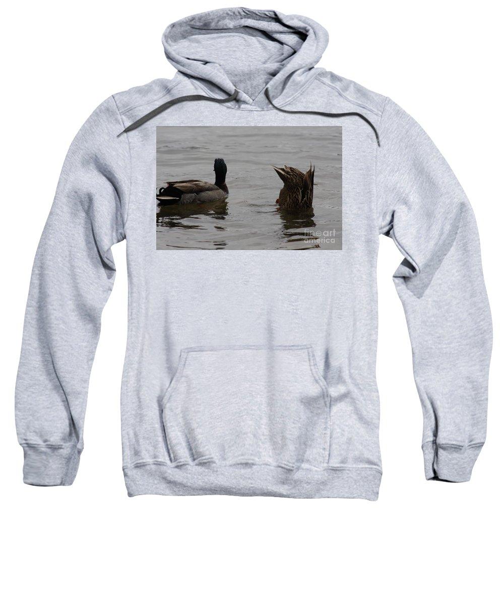 Mallard Duck Photography Sweatshirt featuring the photograph Extreme Fishing by Kim Henderson