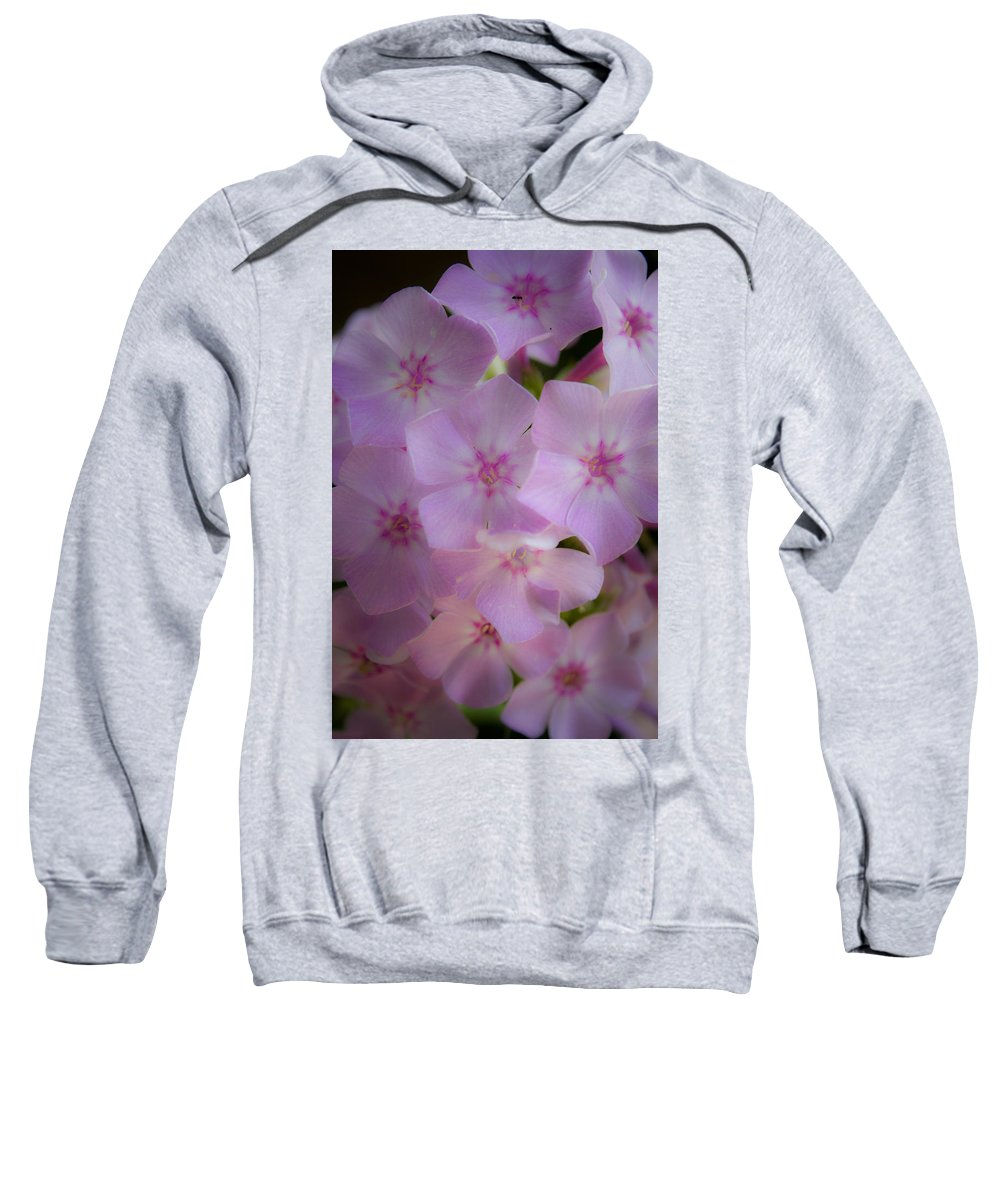 Phlox Sweatshirt featuring the photograph Fairy Tale Phlox by Teresa Mucha