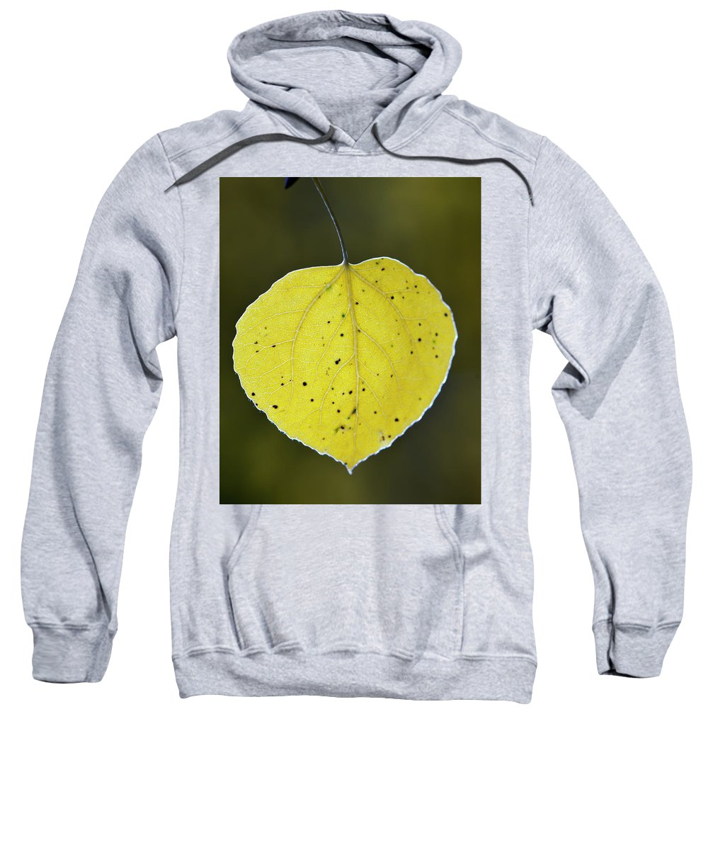 Fall Aspen Leaf Sweatshirt featuring the photograph Fall Aspen Leaf by Gary Langley