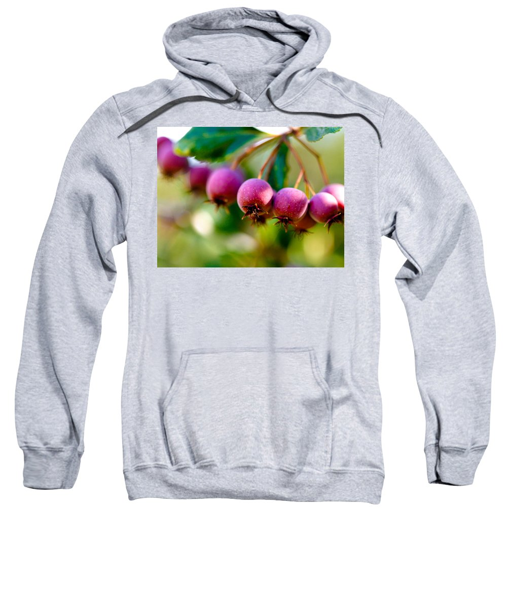 Berry Sweatshirt featuring the photograph Fall Berries by Marilyn Hunt
