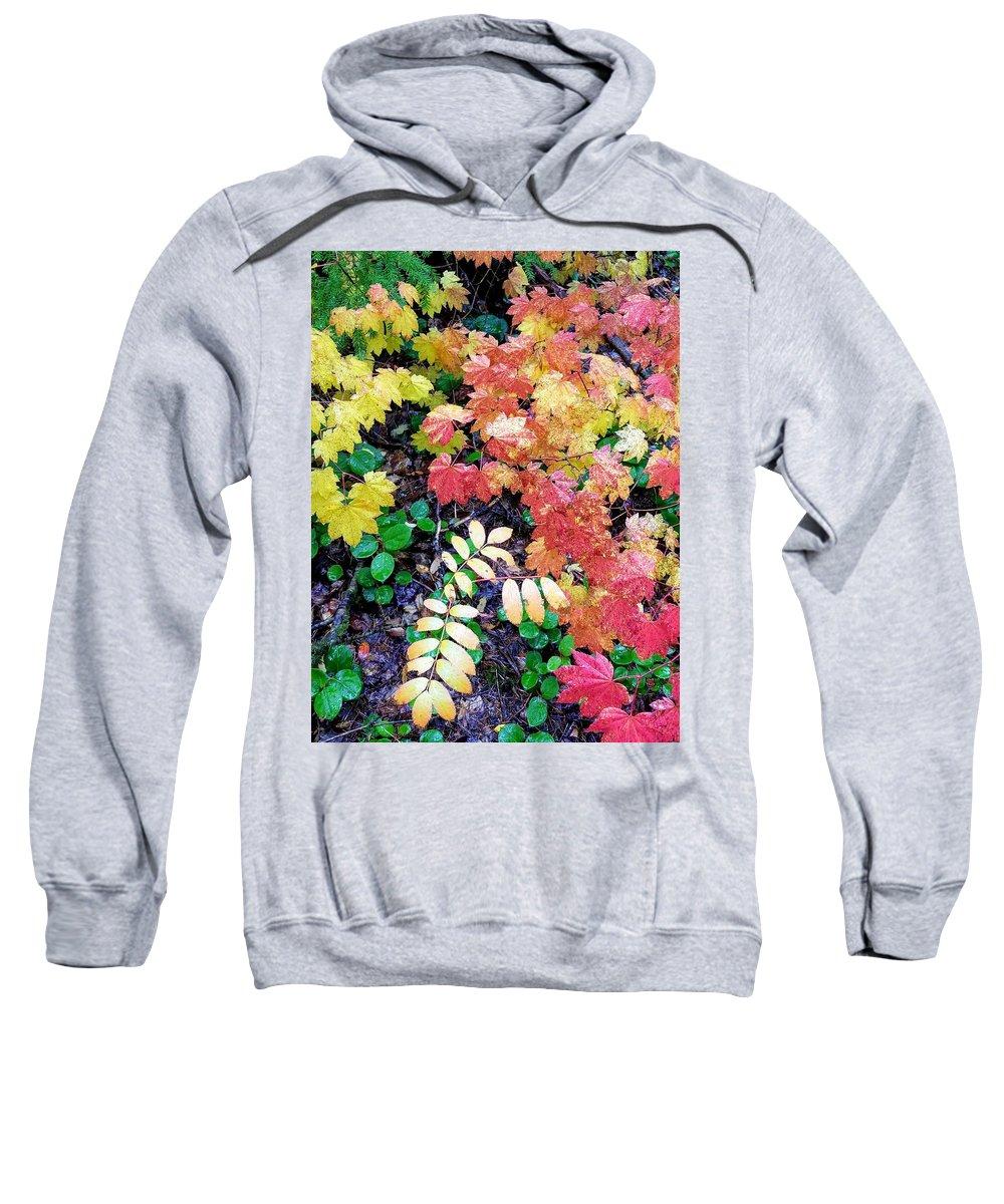 Fall Sweatshirt featuring the photograph Fall Forest Floor by Rhonda Feeback