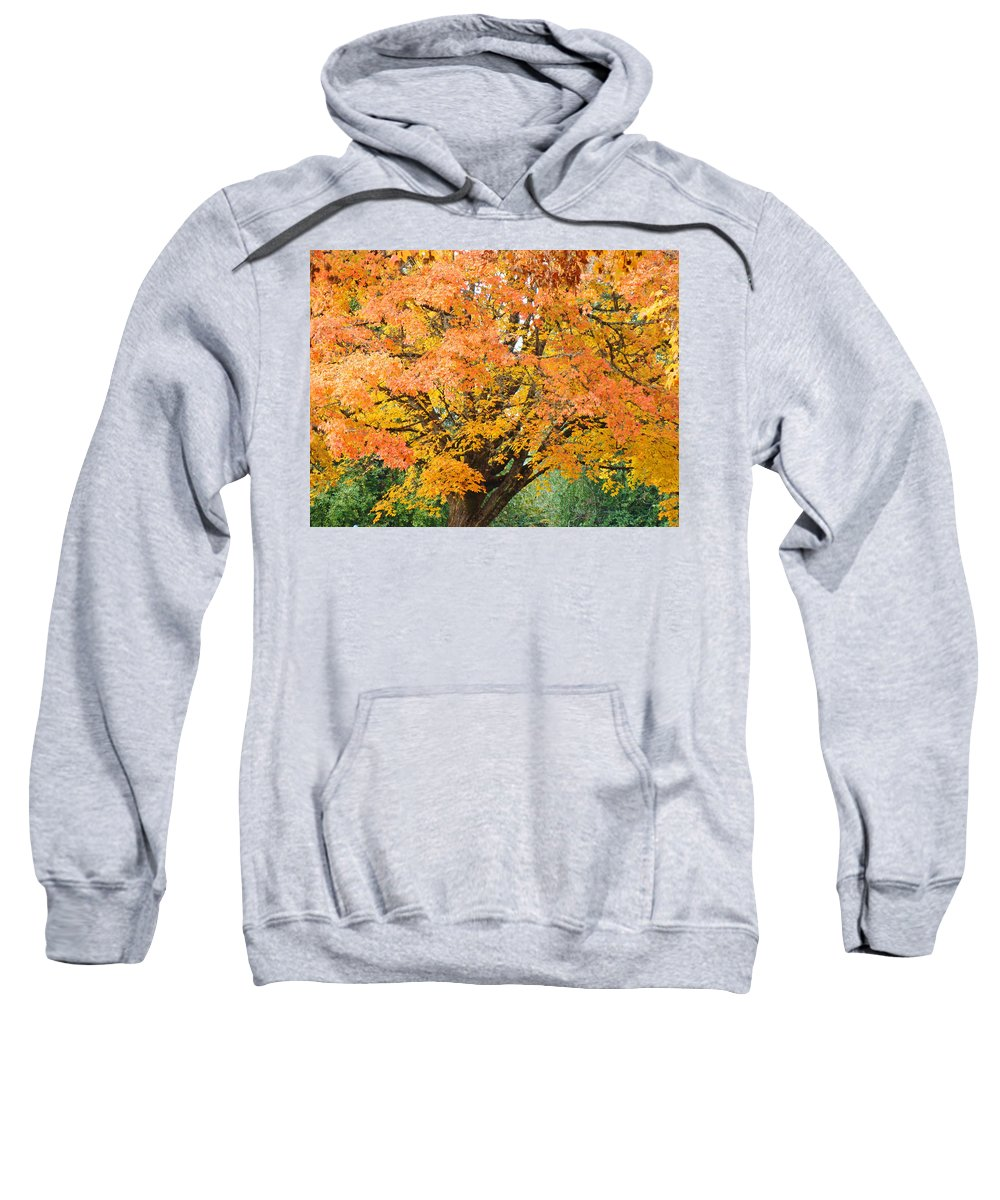 Autumn Sweatshirt featuring the photograph Fall Tree Art Print Autumn Leaves by Baslee Troutman