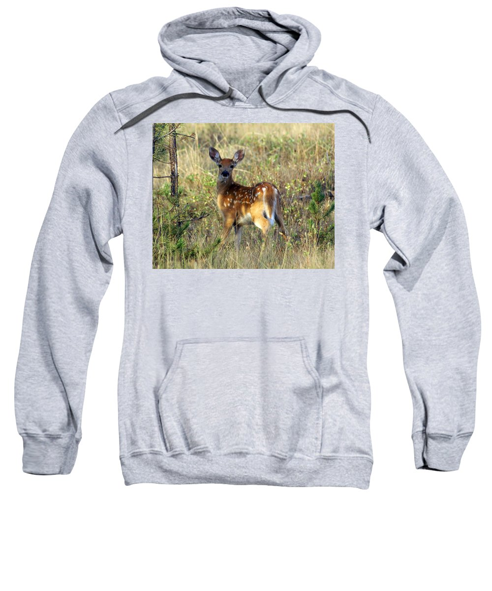 Deer Sweatshirt featuring the photograph Fawn by Marty Koch