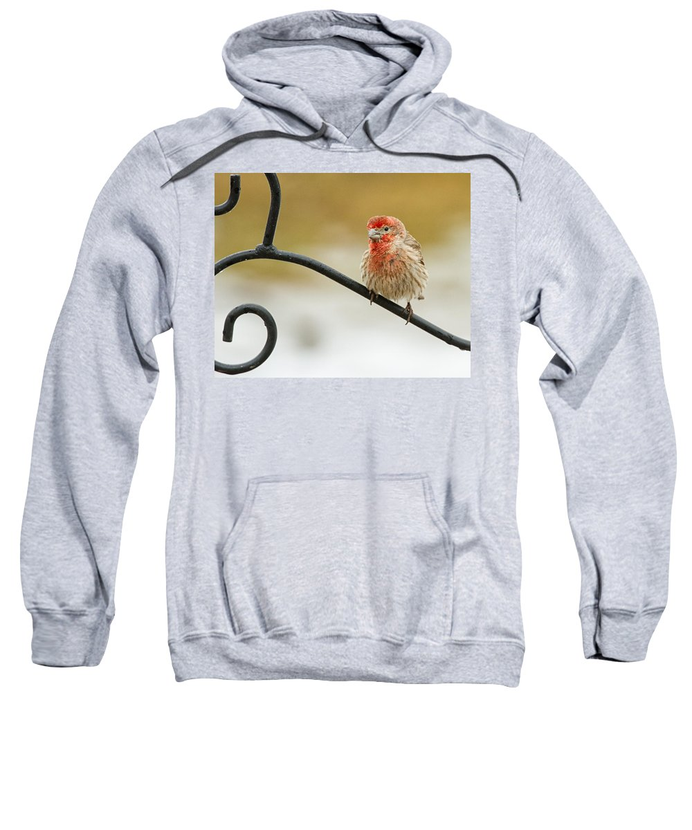 House Finch Sweatshirt featuring the photograph Feathers Ruffled by Brian Caldwell