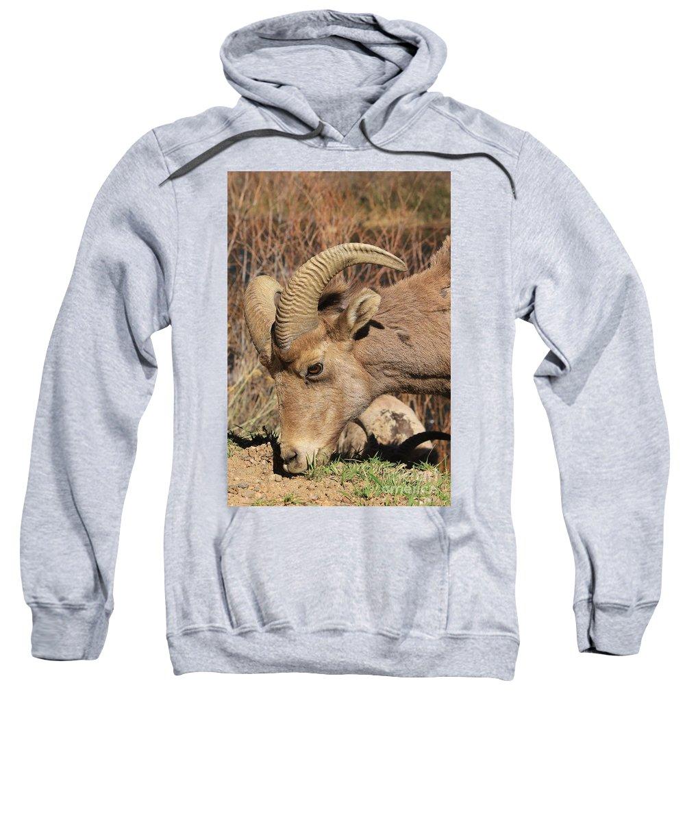Nature Sweatshirt featuring the photograph Feeding Time 2 by Tonya Hance