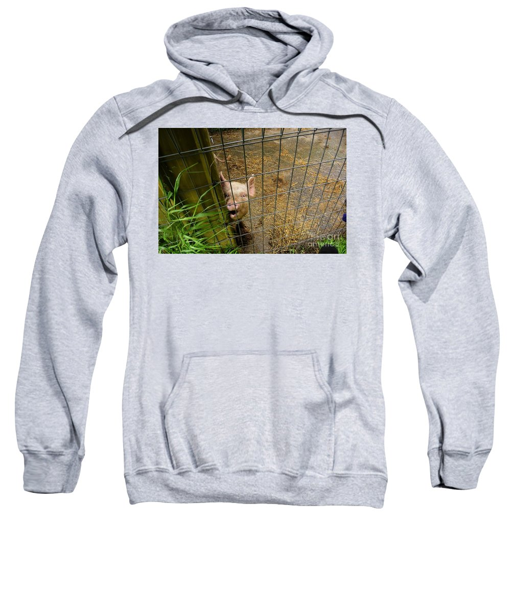 Pig Sweatshirt featuring the photograph Feeding Time by Oscar Moreno