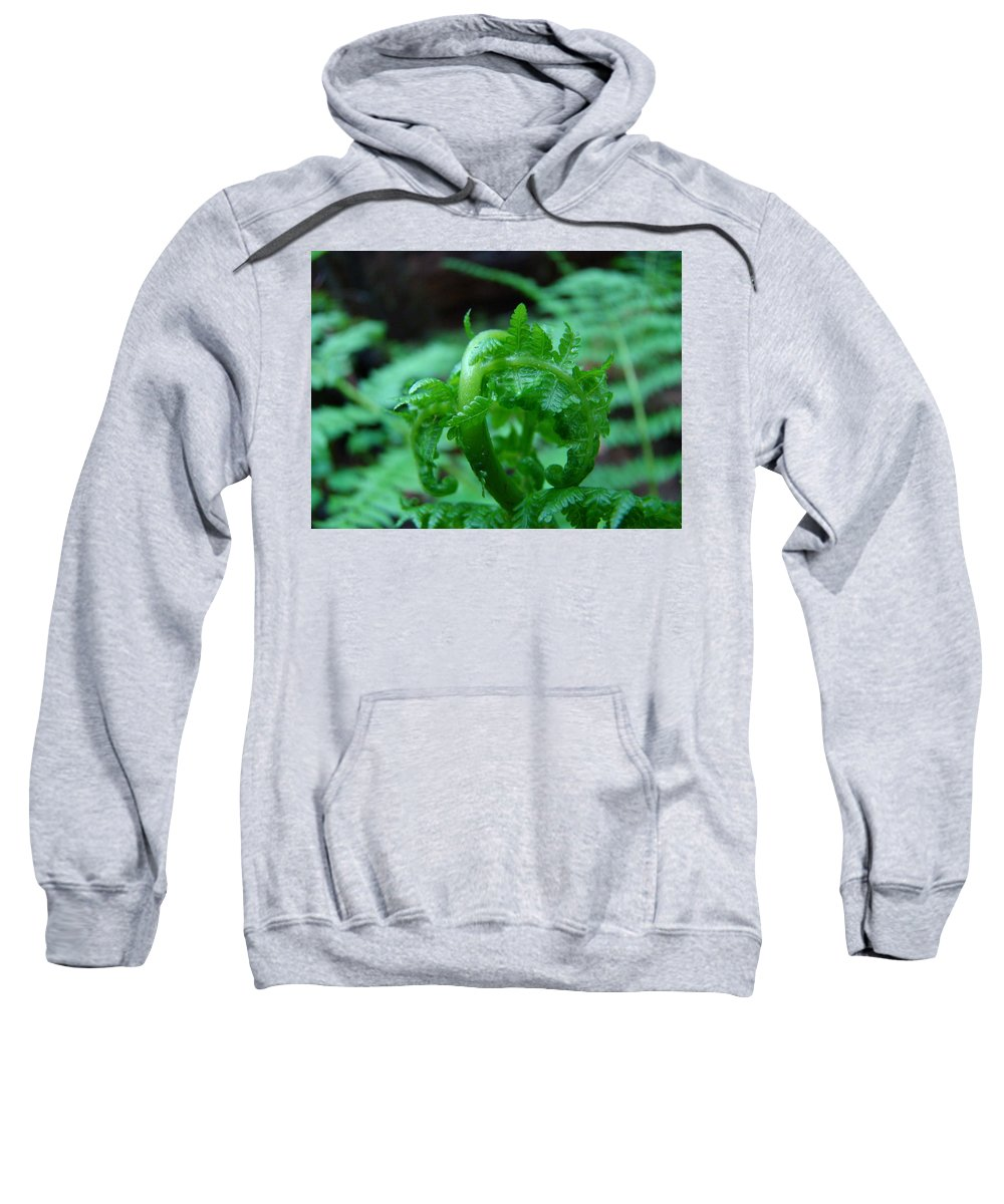 Fern Sweatshirt featuring the photograph Fern Art Prints Green Forest Ferns Giclee Baslee Troutman by Baslee Troutman