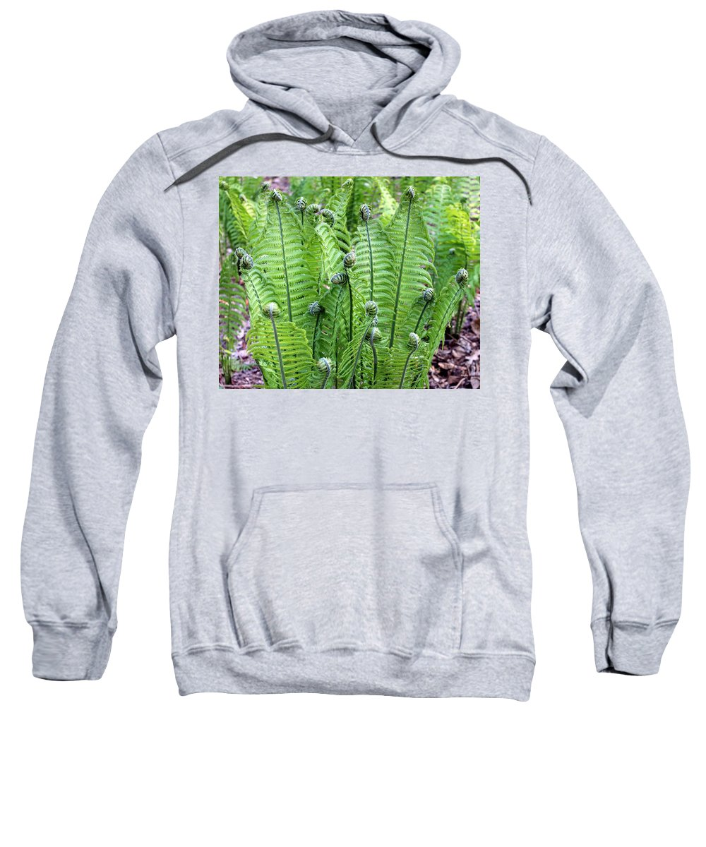 Foliage Sweatshirt featuring the photograph Fern Meet And Greet by Deborah Crew-Johnson