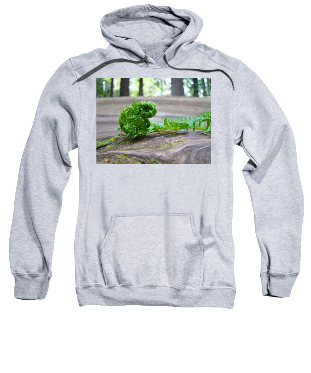 Fern Sweatshirt featuring the photograph Fern On Big Redwood Tree Art Prints Baslee Troutman by Baslee Troutman