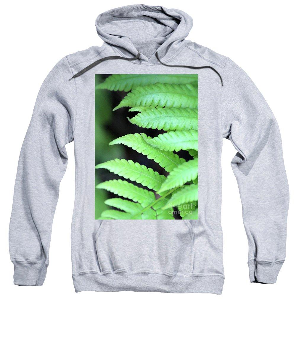 Ferns Sweatshirt featuring the photograph Fern Tips - Digital Painting by Carol Groenen