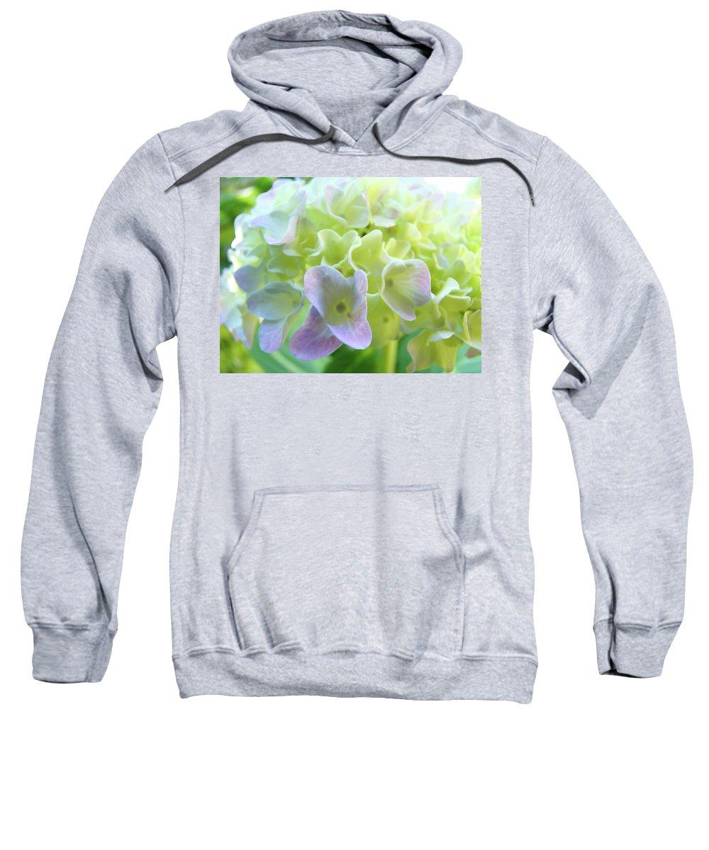 Hydrangea Sweatshirt featuring the photograph Fine Art Prints Hydrangeas Floral Nature Garden Baslee Troutman by Baslee Troutman