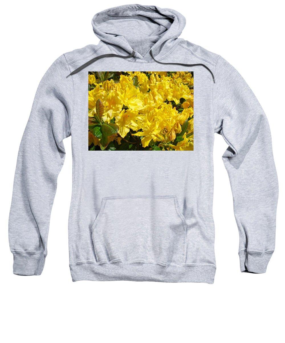 Rhodies Sweatshirt featuring the photograph Fine Art Prints Yellow Rhodies Floral Garden Baslee Troutman by Baslee Troutman