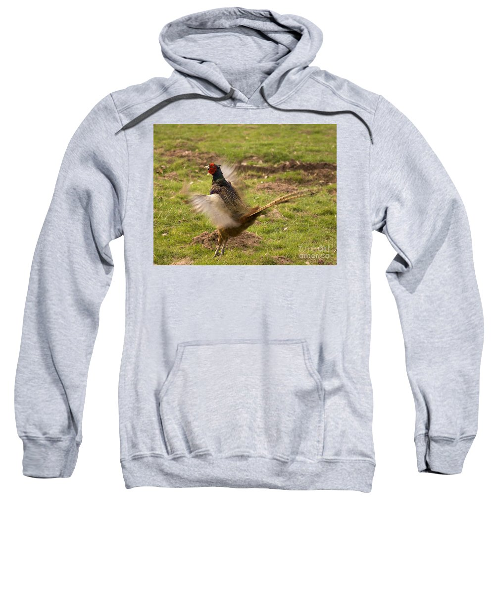 Pheasant Sweatshirt featuring the photograph Flapping The Wings by Angel Ciesniarska