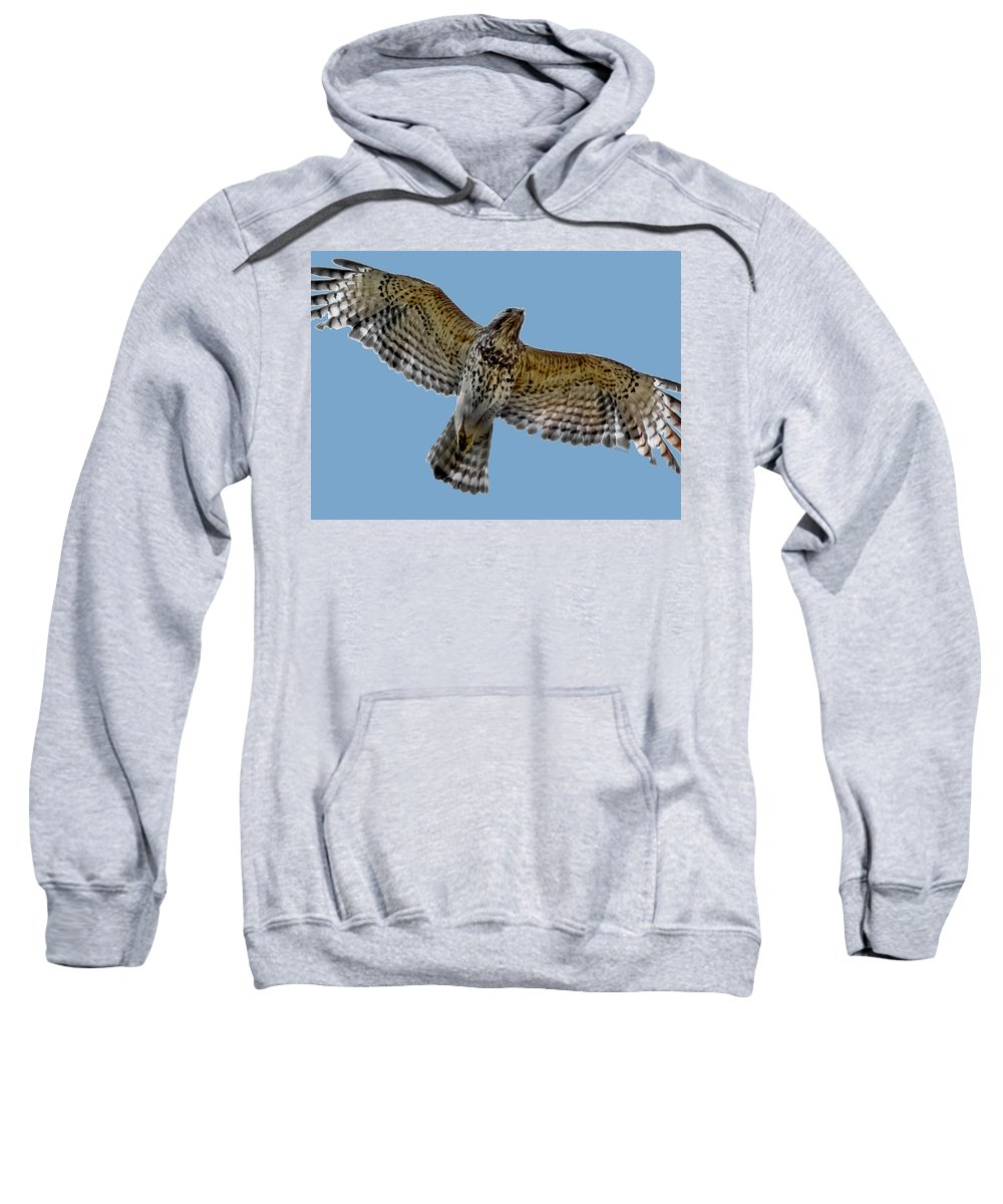 Hawk Sweatshirt featuring the digital art Flight Of The Red Shouldered Hawk by DigiArt Diaries by Vicky B Fuller