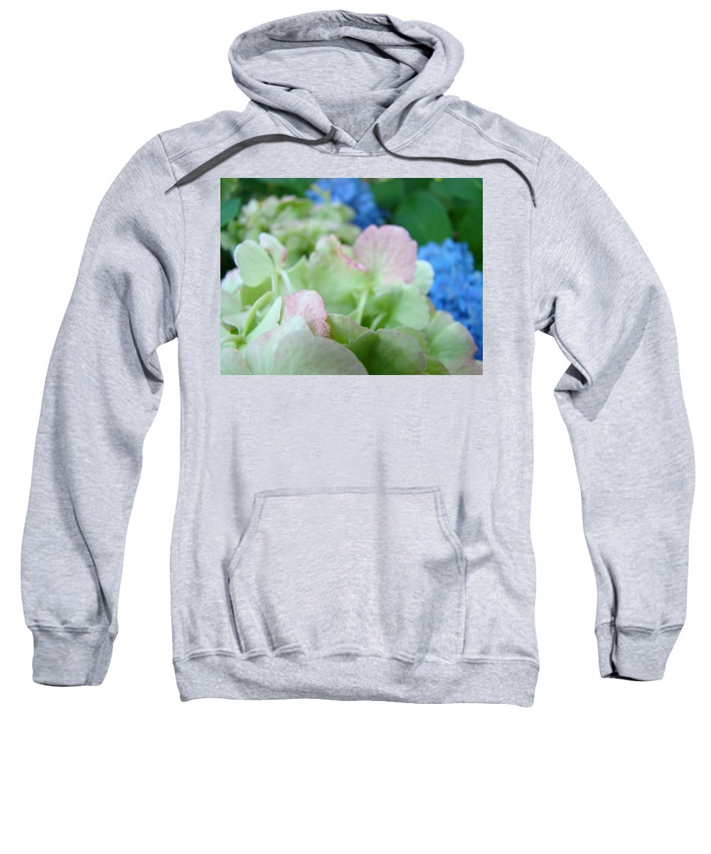 Hydrangea Sweatshirt featuring the photograph Floral Artwork Hydrangea Flowers Soft Nature Giclee Baslee Troutman by Baslee Troutman