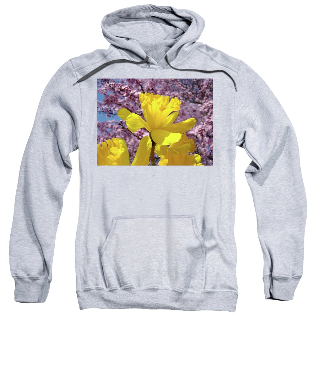 Nature Sweatshirt featuring the photograph Floral Fine Art Daffodils Art Prints Spring Flowers Sunlit Baslee Troutman by Baslee Troutman