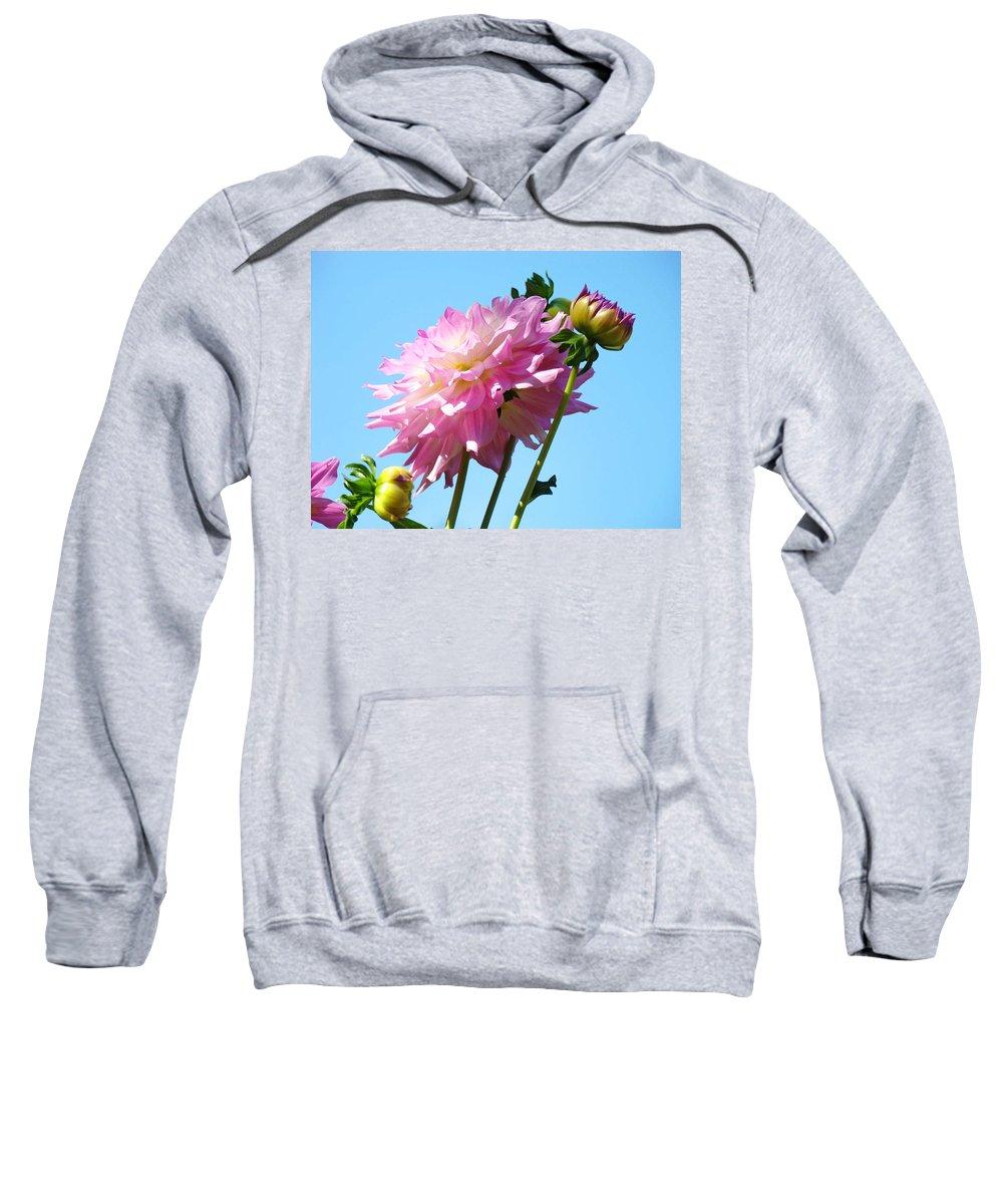 Dahlia Sweatshirt featuring the photograph Floral Landscape Art Print Pink Dahlia Flower Blue Sky Canvas Baslee Troutman by Baslee Troutman