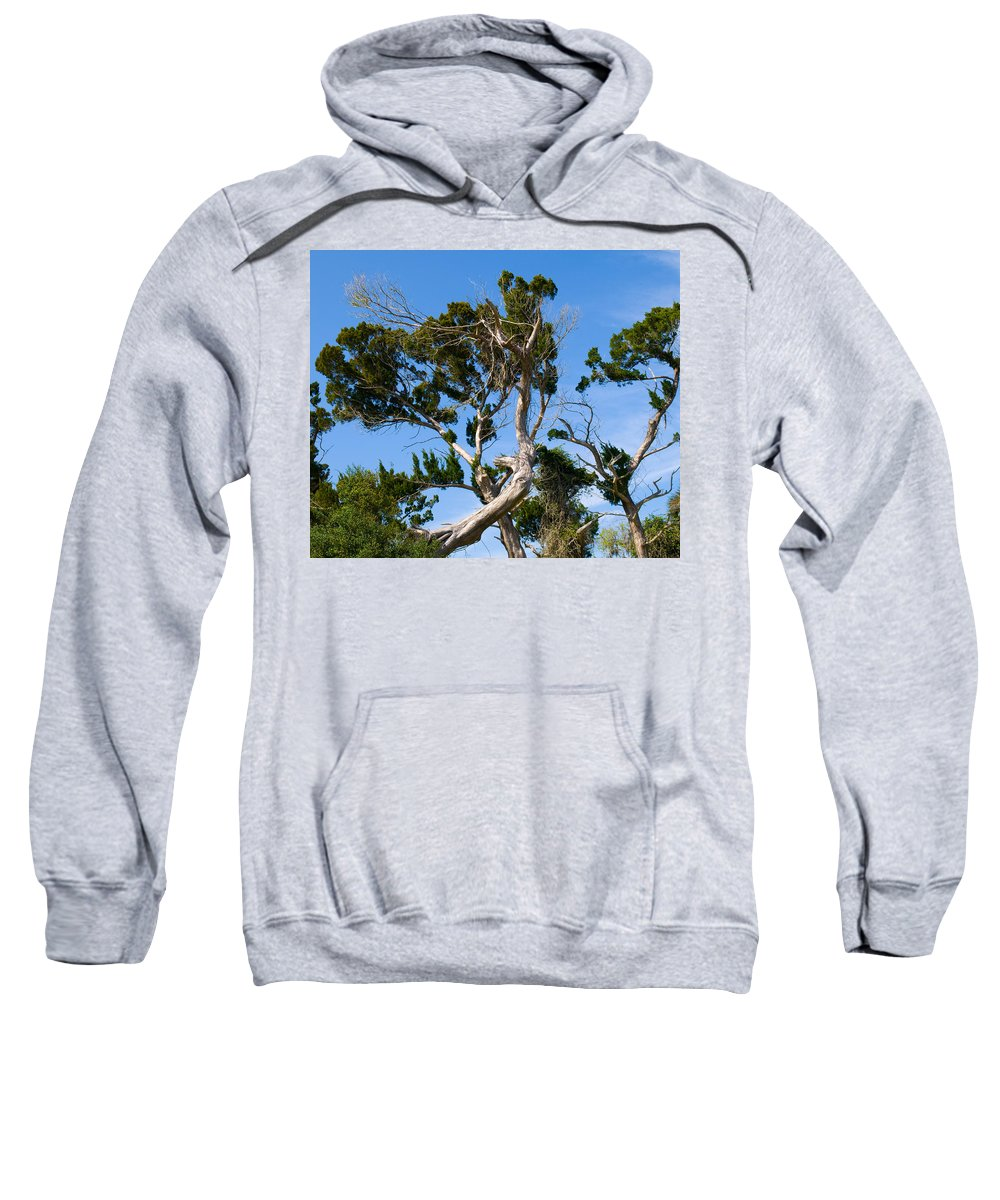 Cedar; Cedars; Tree; Florida; Timucuan; Indian; Mound; Shell; Midden; Oak; Hill; Flora; Branch; Weat Sweatshirt featuring the photograph Florida Cedar Tree by Allan Hughes