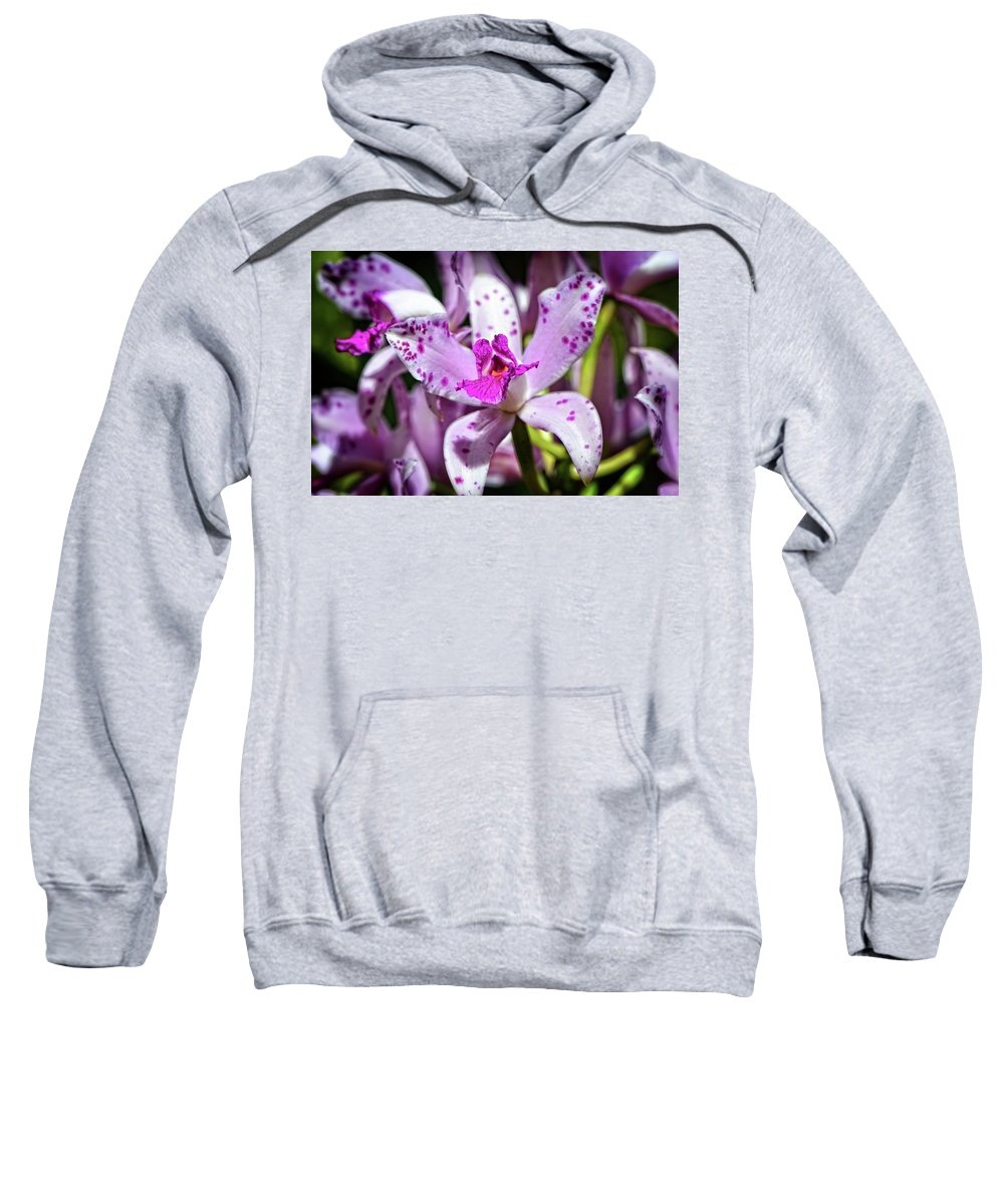 Orchid Sweatshirt featuring the photograph Flower Art - Intimate Orchid 4 - Sharon Cummings by Sharon Cummings