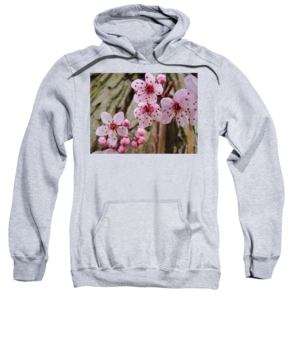 Tree Sweatshirt featuring the photograph Flower Blossoms Pink Tree Blossoms Art Print Giclee Spring Flowers by Baslee Troutman