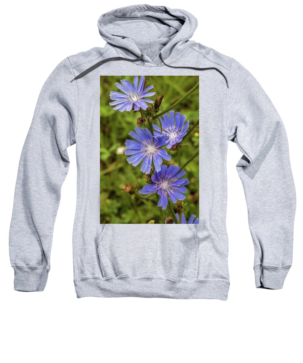 Flower Sweatshirt featuring the photograph Flower Chicory by Alex Konakov