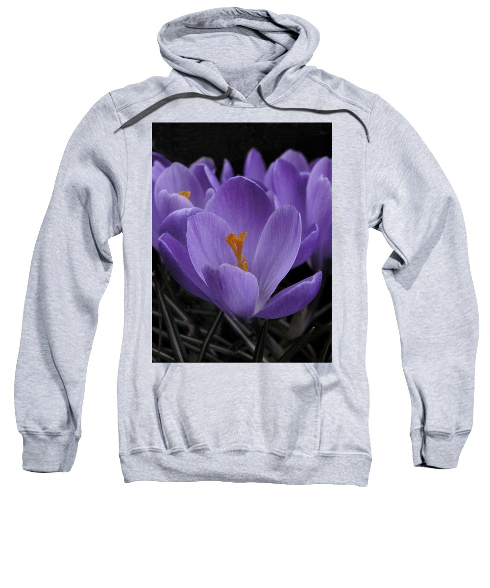 Flowers Sweatshirt featuring the photograph Flower Crocus by Nancy Griswold