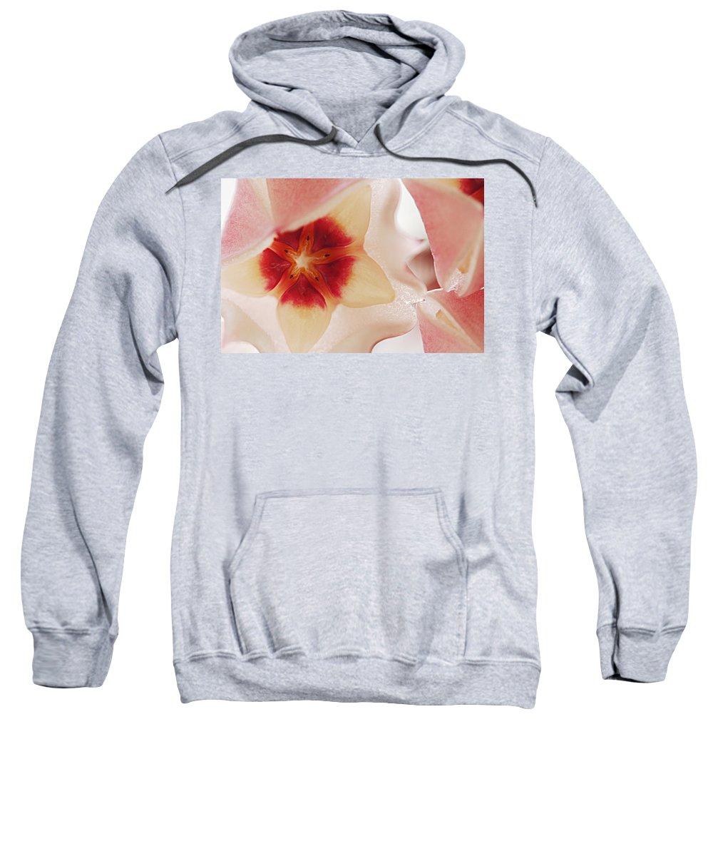 Flower Sweatshirt featuring the photograph Flower Hoya 3 by Jill Reger