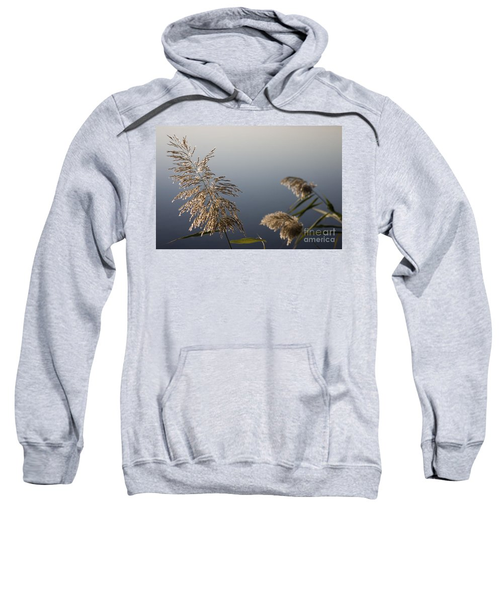 Nature Sweatshirt featuring the photograph Flowering Cane Plant by Nahum Budin