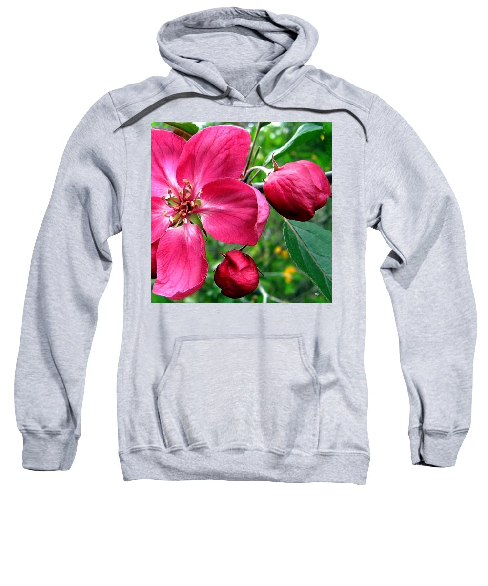 Flowering Crab Apple Sweatshirt featuring the photograph Flowering Crab Apple by Will Borden