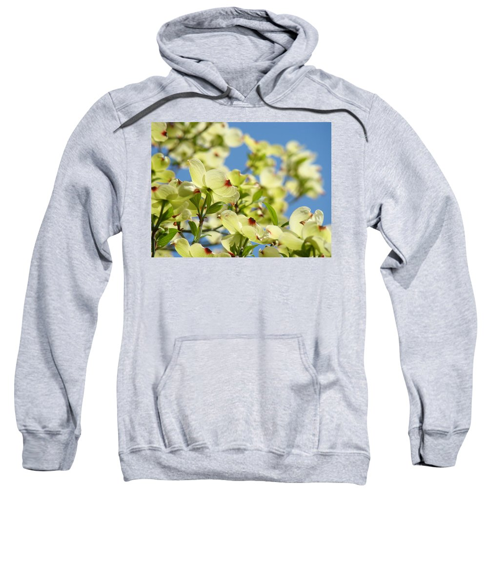 Dogwood Sweatshirt featuring the photograph Flowering Dogwood Tree Art Print White Dogwood Flowers Blue Sky Art by Baslee Troutman