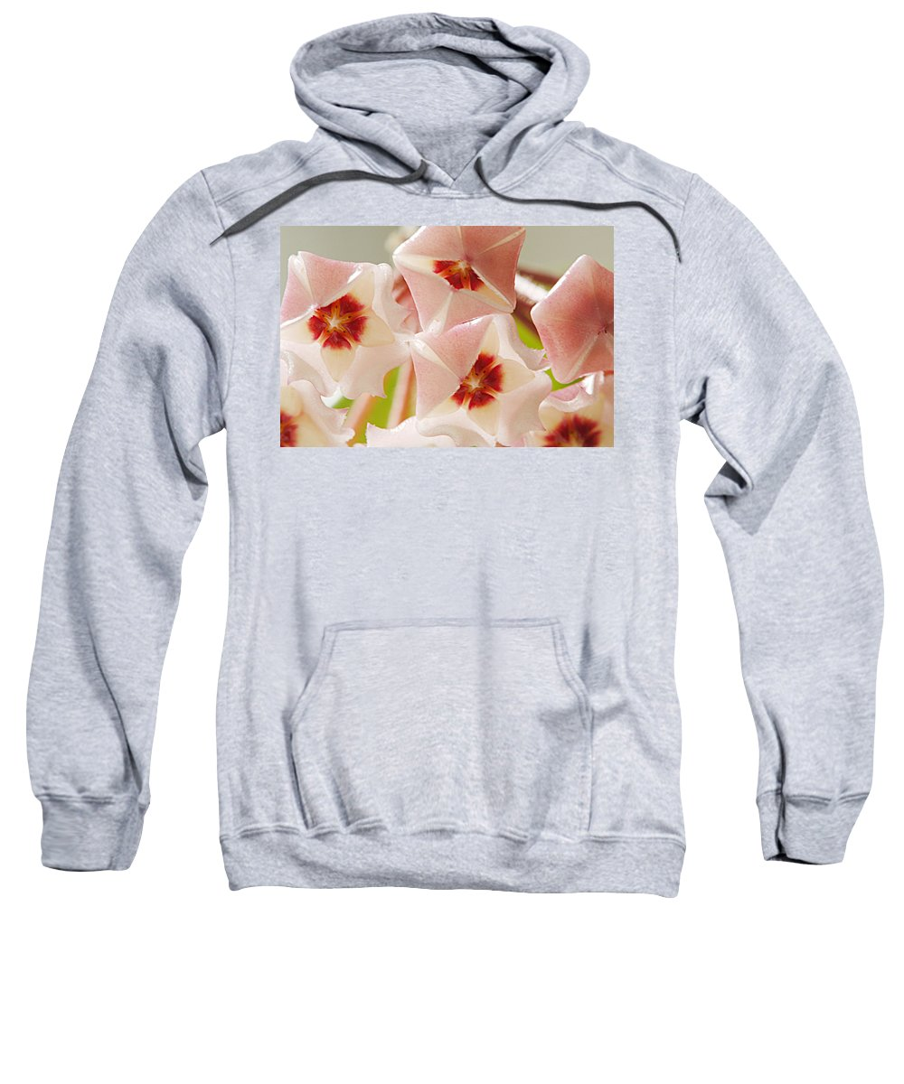 Flowers Sweatshirt featuring the photograph Flowers-hoya 1 by Jill Reger