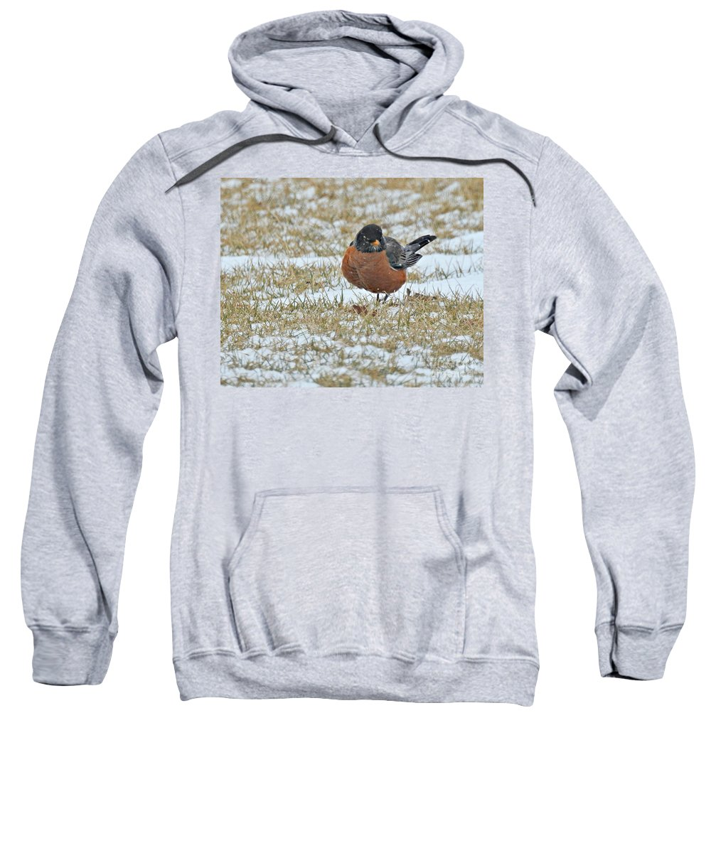 Fluffy Robin In Snow Sweatshirt featuring the photograph Fluffy Robin In Snow by Kathy M Krause