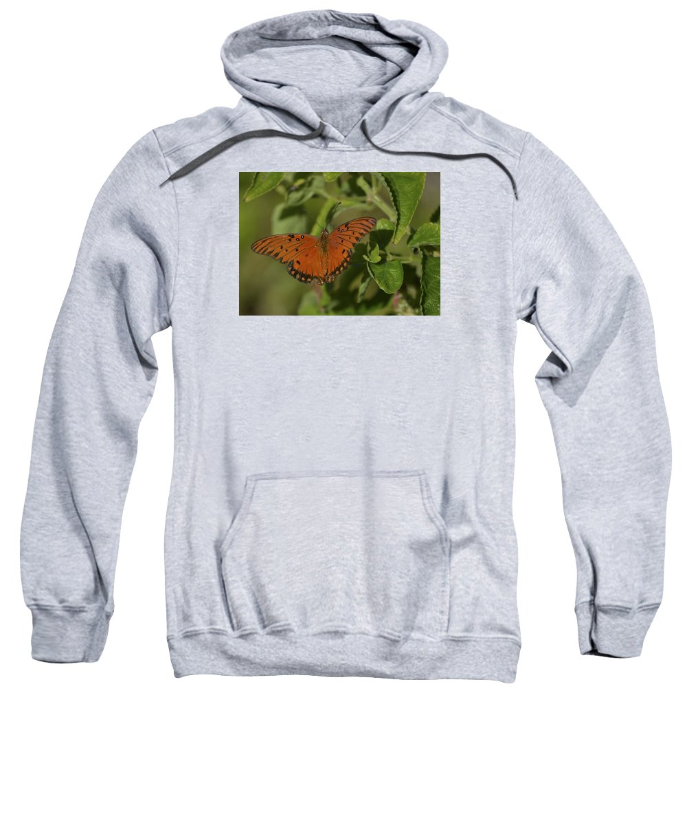 Butterfly Sweatshirt featuring the photograph Fluttering By by Karen Rose Warner