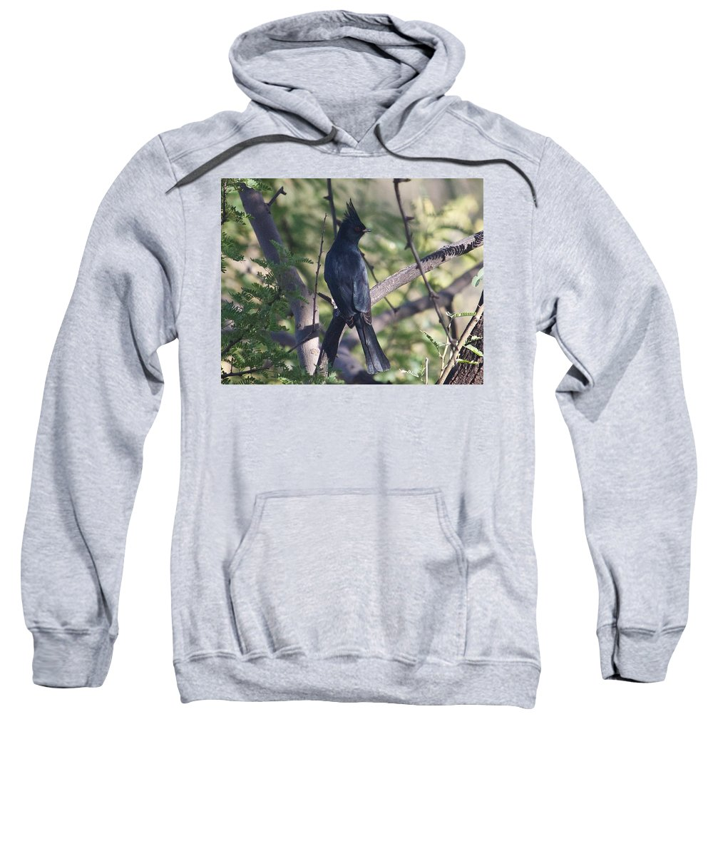 Flycatcher Sweatshirt featuring the digital art Silky Flycatcher by Terri Burbank