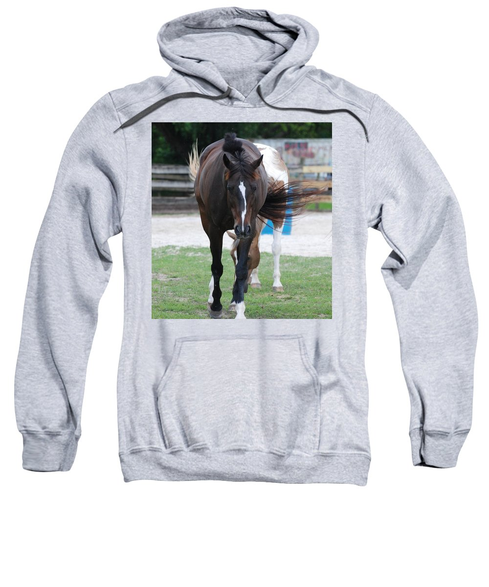 Horses Sweatshirt featuring the photograph Flying Circus by Rob Hans