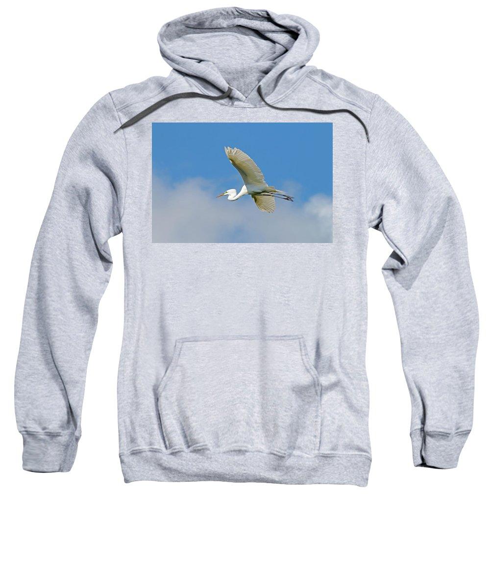 Bird Sweatshirt featuring the photograph Flying Great Egret by Daniel Caracappa