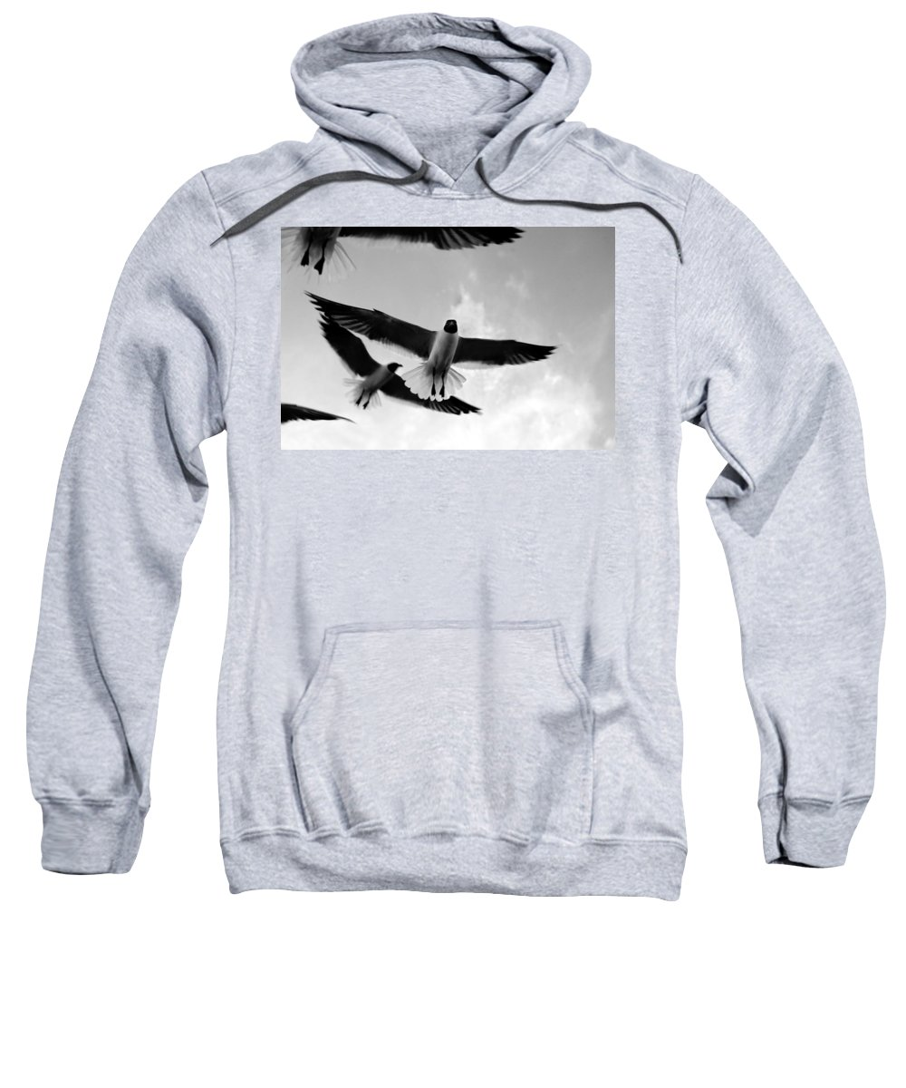 Bird Sweatshirt featuring the photograph Flying High by Marilyn Hunt