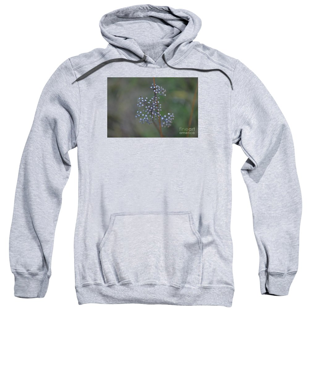 Eva Maria Nova Sweatshirt featuring the photograph Forgotten Beauty by Eva Maria Nova