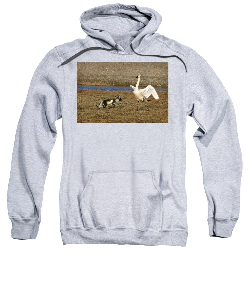 Fox Sweatshirt featuring the photograph Fox Vs Swan by Anthony Jones