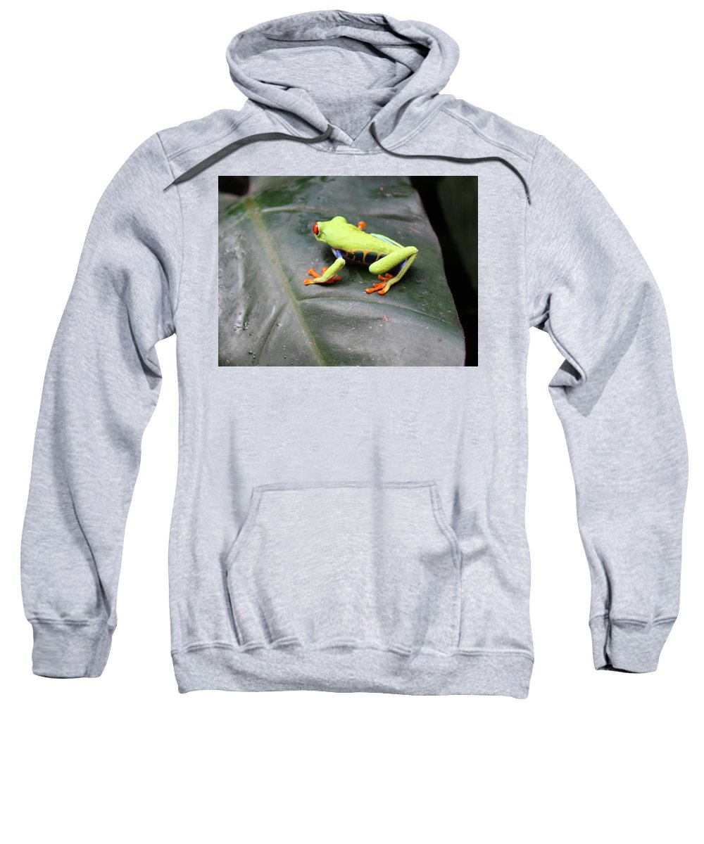 Frog Sweatshirt featuring the photograph Who's There? by Lorraine Baum