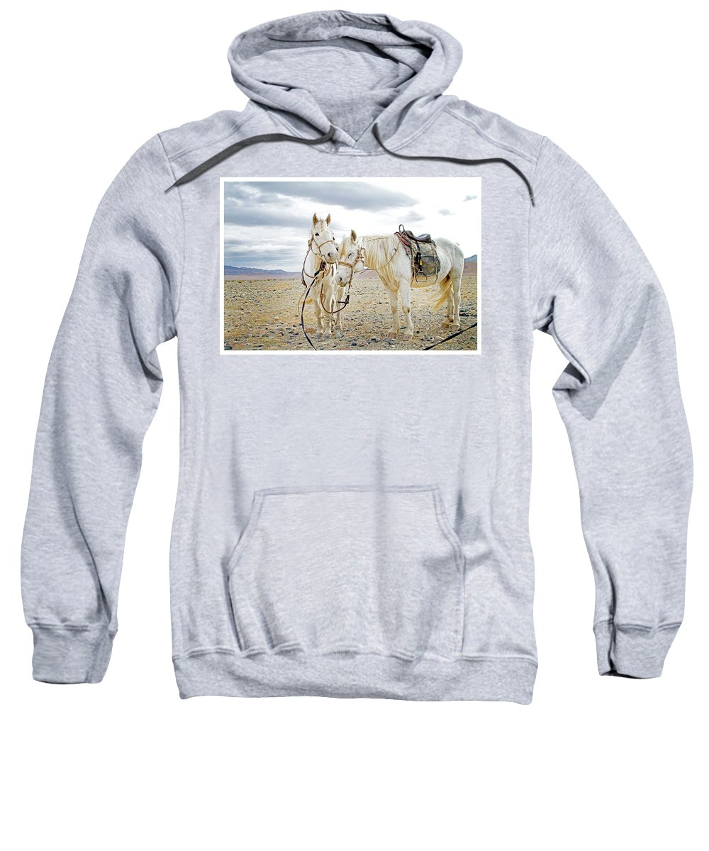 Horses Sweatshirt featuring the photograph Friends And Companions by Concrerte Gallery