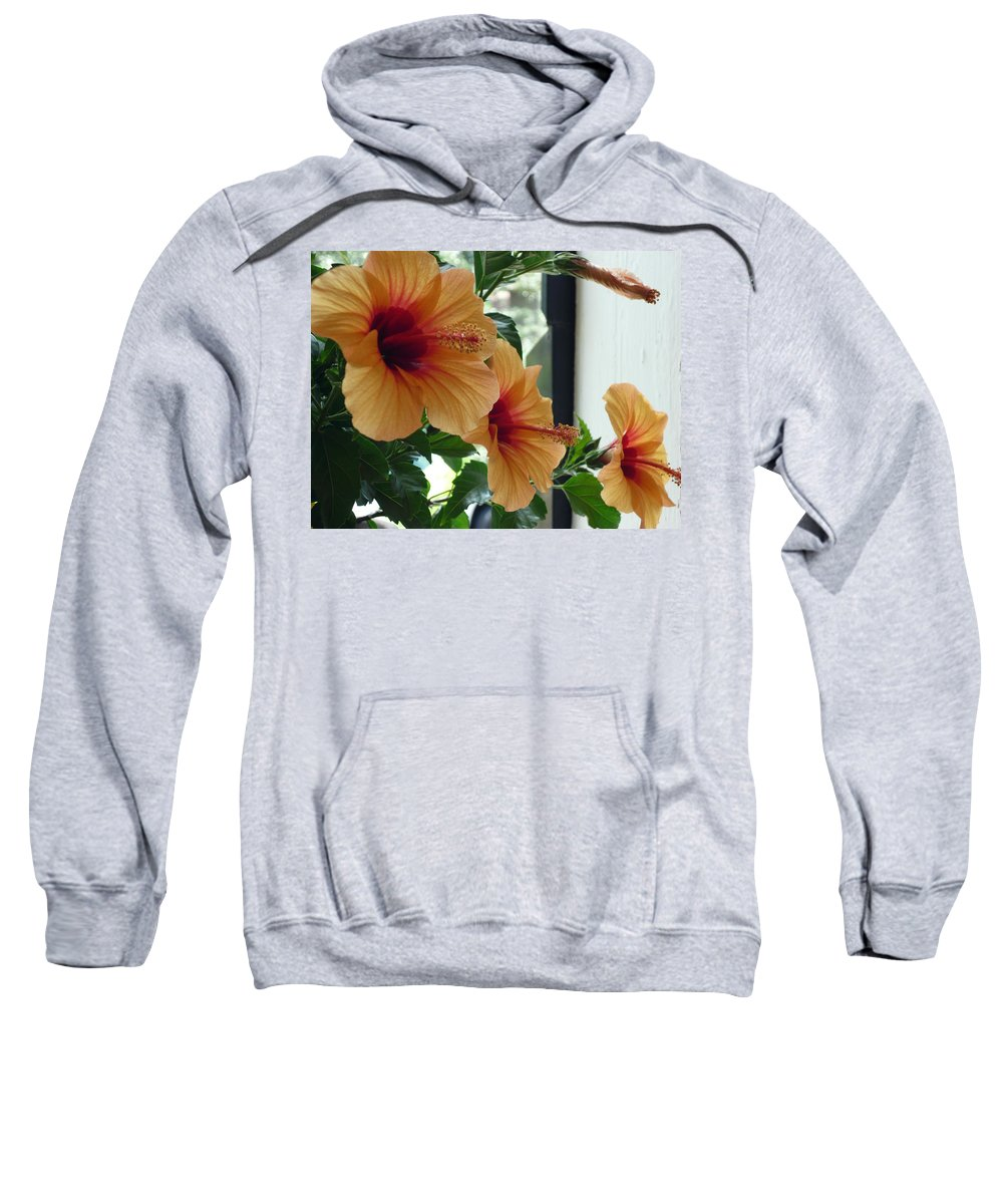 Photography Flower Floral Bloom Hibiscus Peach Sweatshirt featuring the photograph Friends For A Day by Karin Dawn Kelshall- Best