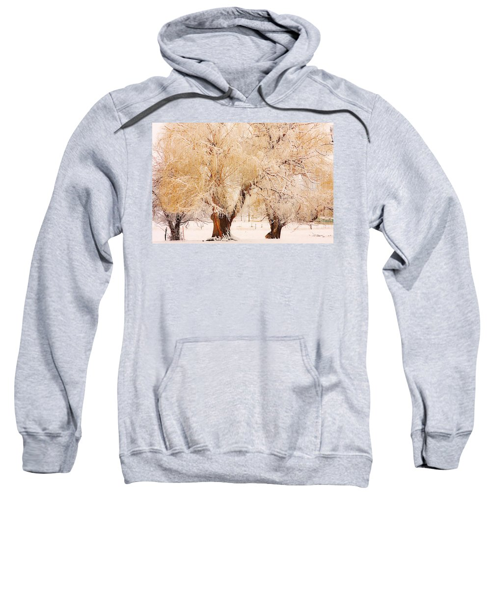 Trees Sweatshirt featuring the photograph Frosted Golden Trees by James BO Insogna