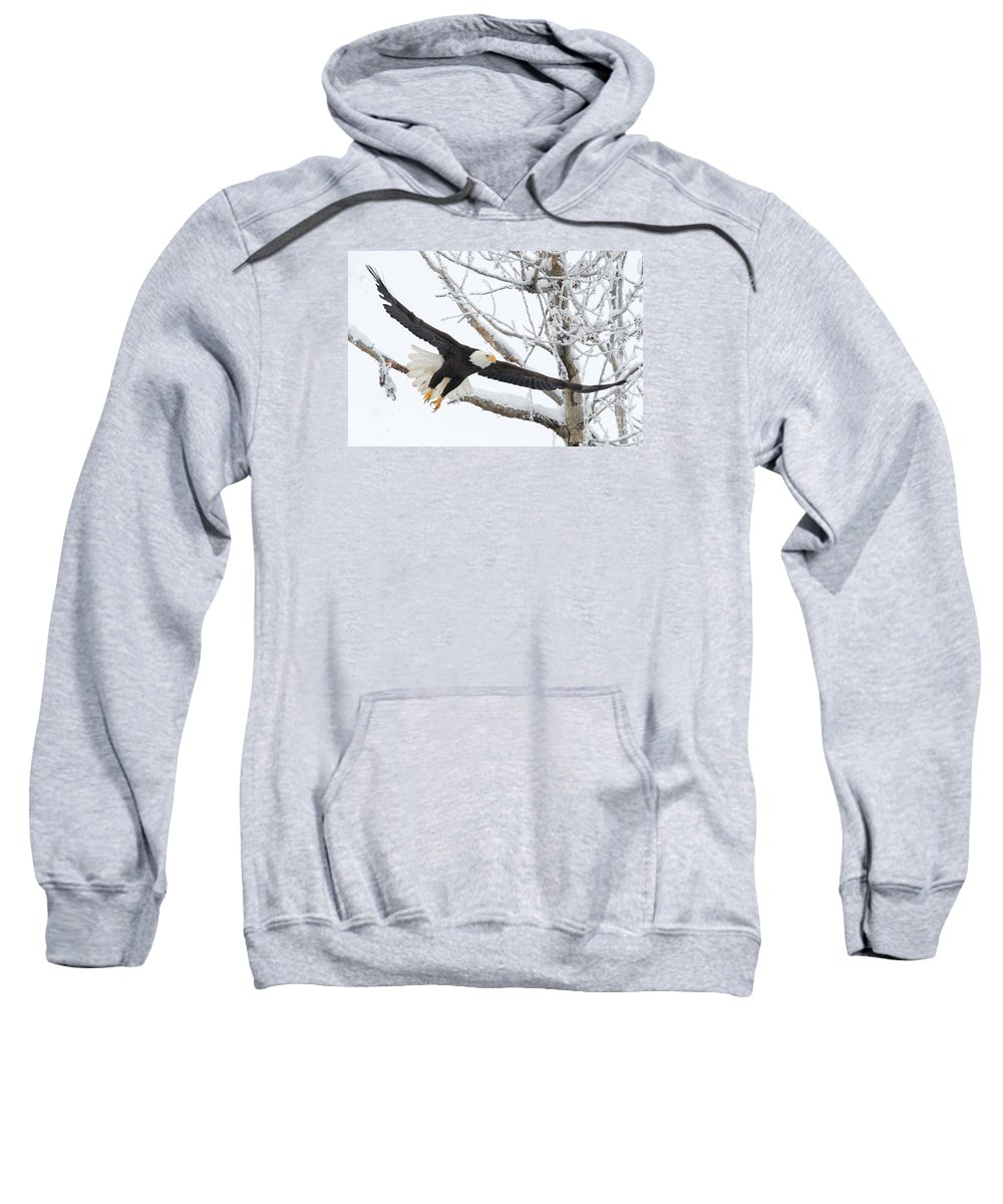 Bald Eagle Sweatshirt featuring the photograph Frosty Take-off by Mike Dawson