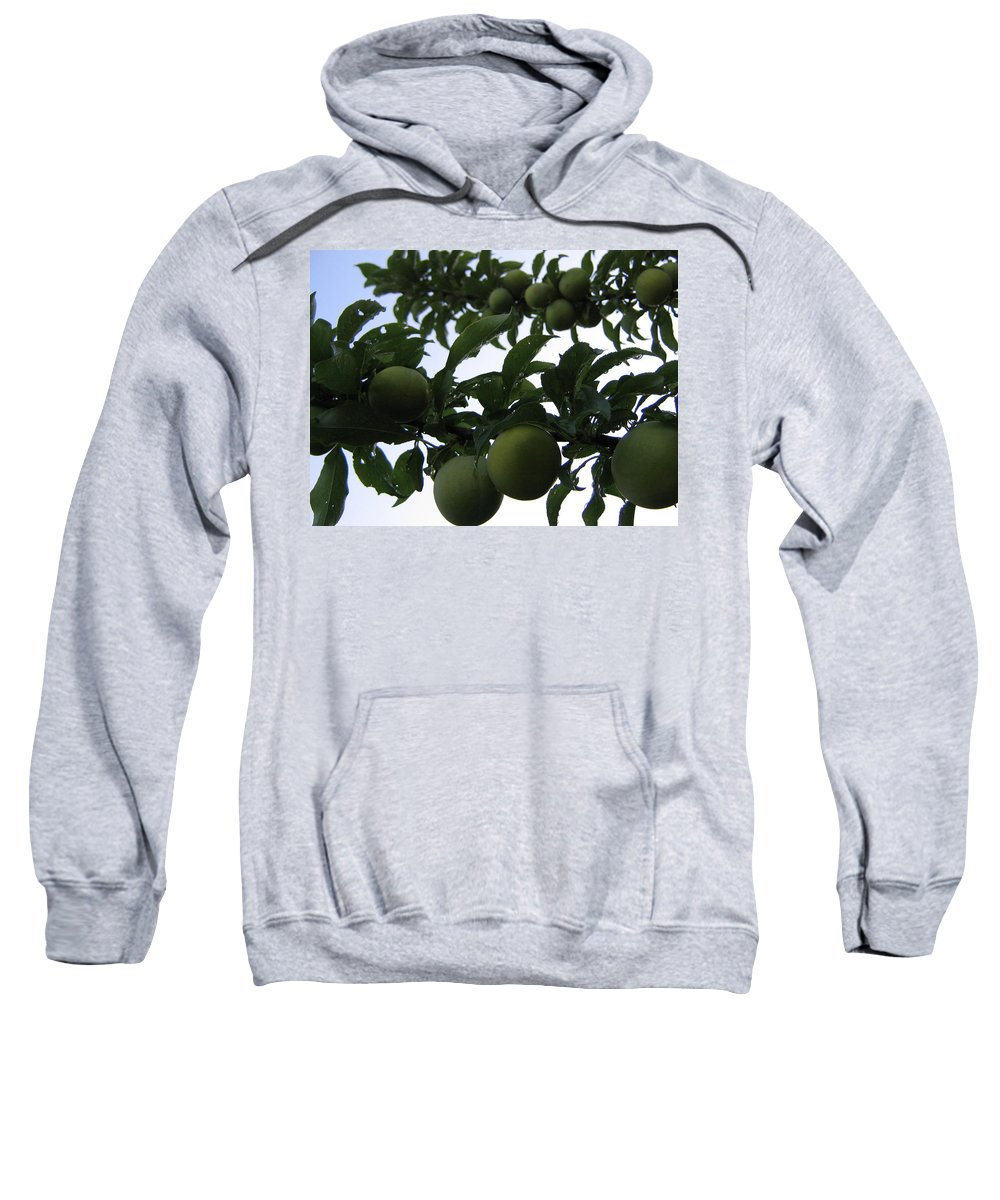 Plums Sweatshirt featuring the photograph Fruit And Sky_raindrops by Barbara Yearty