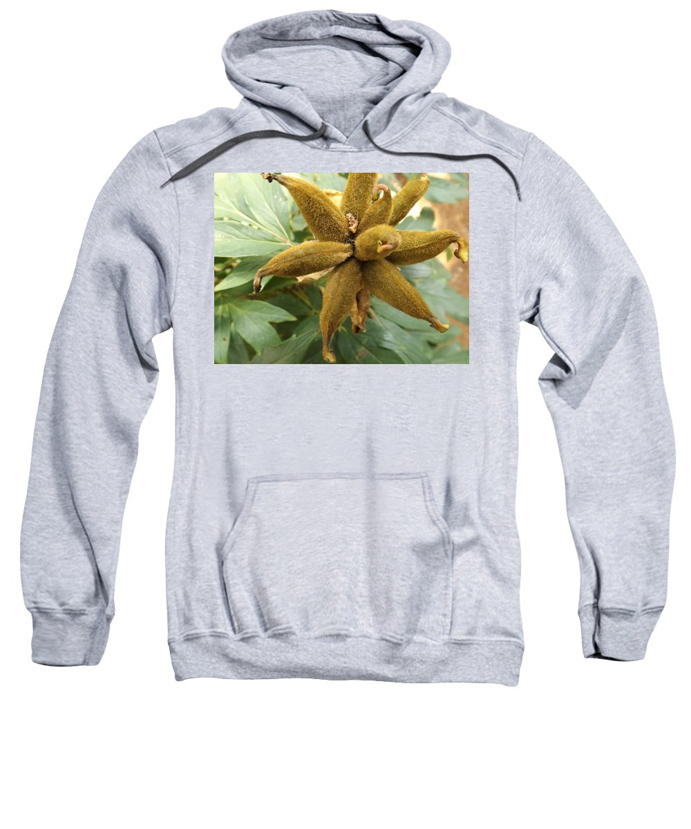 Exotic Sweatshirt featuring the photograph Fuzzy Pinwheel by Cat Sanchez