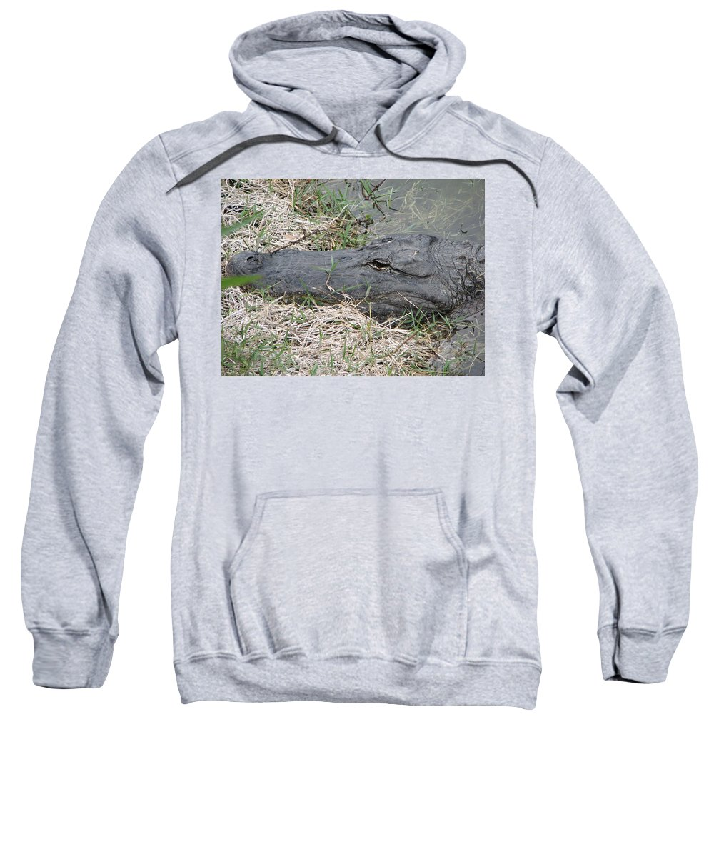 Alligator Sweatshirt featuring the photograph Gator by Stacey May